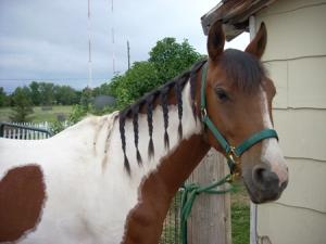 braids061409