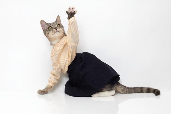 united-bamboo-cat-calendar-2